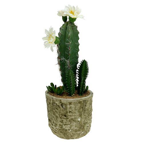 Cactus en pot avec fleur 21 cm blanc