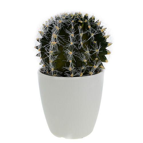 Cactus vert en pot 14 cm