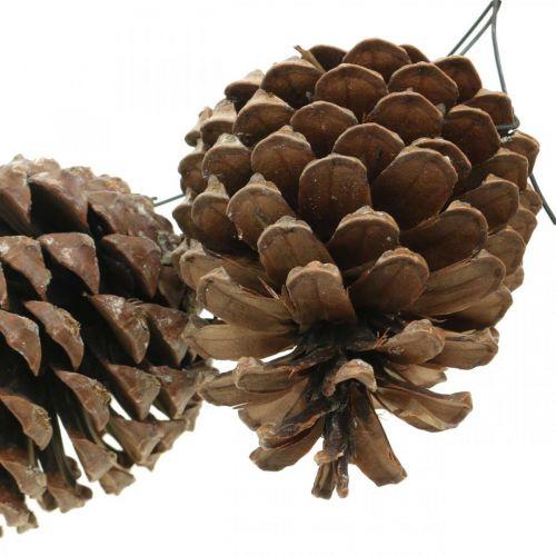 Cônes maritimes avec fil, jours commémoratifs, décorations de Noël, produit naturel H8–13cm Ø6–9cm 50pcs