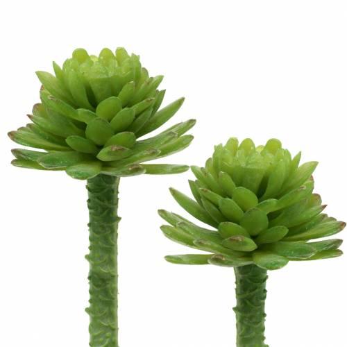 Mini Succulente 6,5cm 6pcs