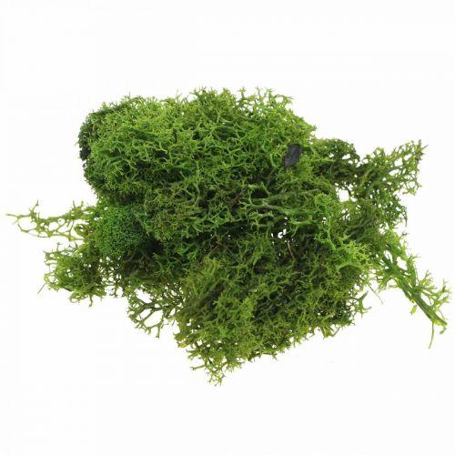 Mousse décorative pour l'artisanat mousse naturelle vert foncé conservée 40g