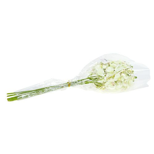 Orchid e verte claire 56 cm 6 p boutique en ligne de for Fenetre factice lumineuse