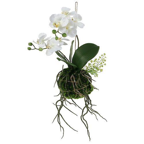 orchidee a suspendre
