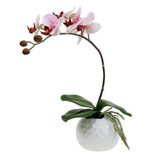 orchidee 37