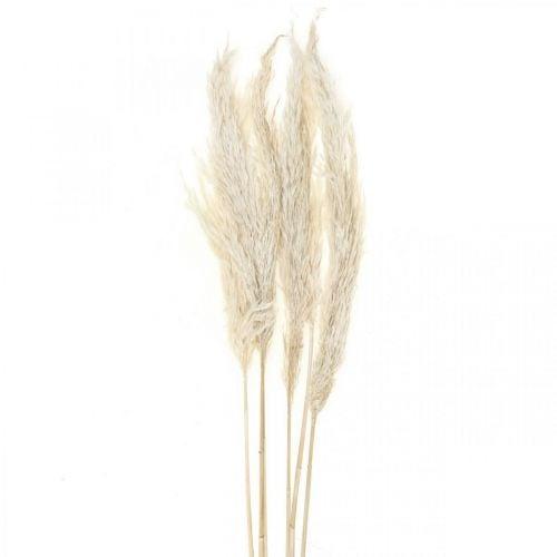 Herbe de la pampa séchée blanchie décoration sèche 65-75cm 6pcs en botte