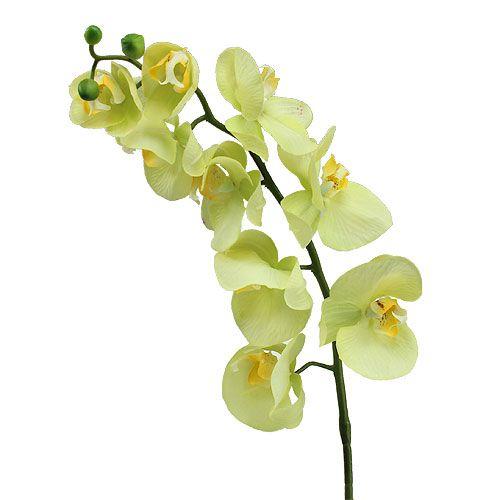 orchidee 77