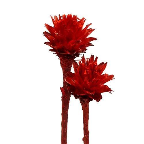 Plumosum 1 rouge 25pcs