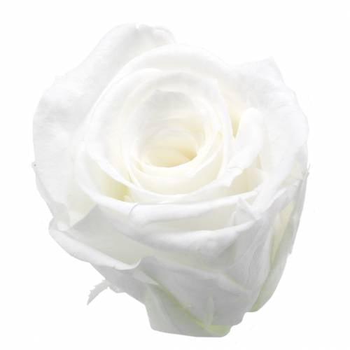 Roses stabilisées moyennes Ø4-4,5cm blanches 8pcs