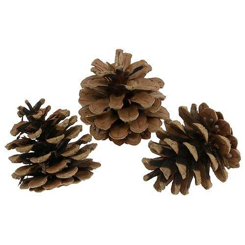 Pommes de pin noir 5cm naturel 5pcs