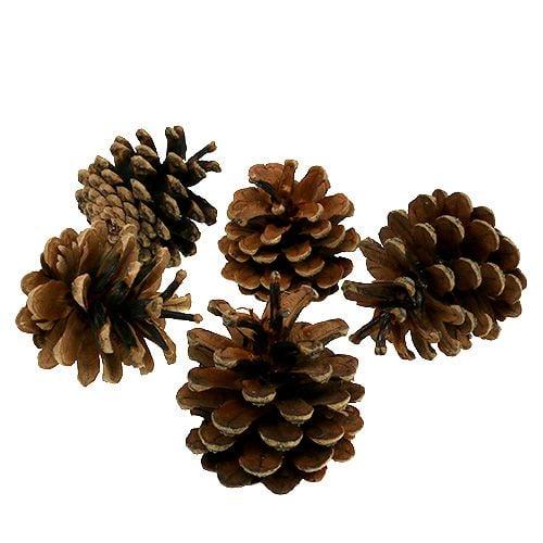 Pommes de pin noir naturel 5kg
