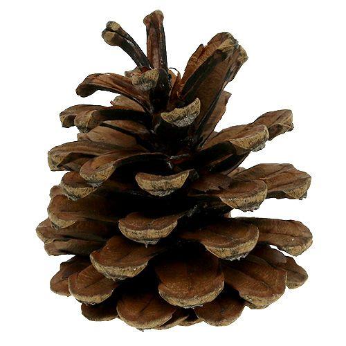 Cônes de pin noir naturels 10 kg