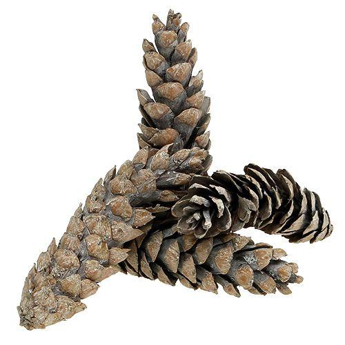 Cônes Strobus 15cm - 20cm blanchis à la chaux 50pcs