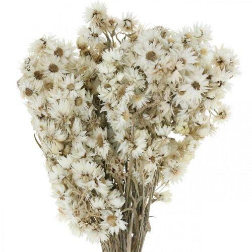 Bouquet Fleurs Éternelles Fleurs Séchées Blanc Petit 15g