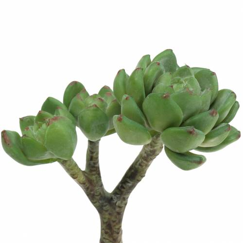 Succulent Echeveria artificiel vert H15cm