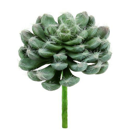Succulente vert Ø 8,5 cm L. 13 cm