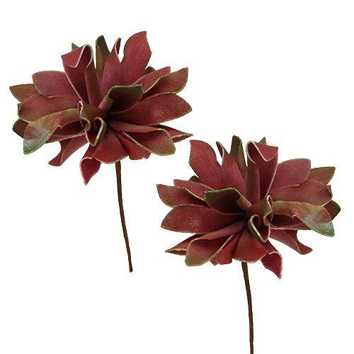Succulente rouge foncé Ø10cm 12P