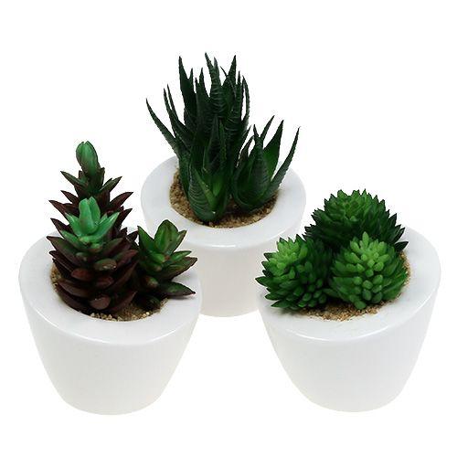 Mélange de succulentes en pot 9 - 11 cm 3 p.