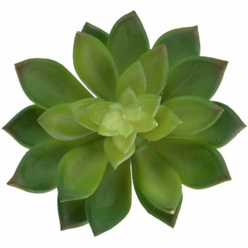 Succulente racine de maison verte 14cm