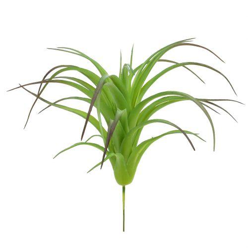 Tillandsia décoratif vert 16 cm 4 p.
