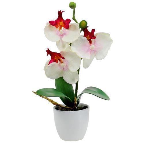 orchidee 29