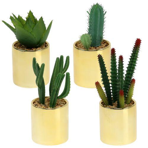 Cactus vert en pot d'or 12cm - 17cm 4P