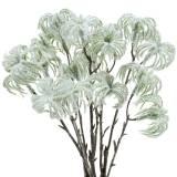 Clématite verte neigeuse 43cm 3pcs