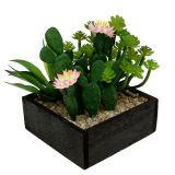 Cactus avec fleur 14 cm, dans caisse en bois