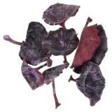 Champignons calyx mauve blanchi 100 p.