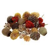 Mélange de fruits décoratifs exotiques et de cônes 500 g