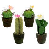 Mini cactus avec fleurs H. 9-12 cm 4 p.
