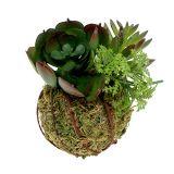 Boule de mousse avec succulentes vertes Ø 7 cm