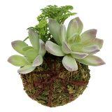 Boule de mousse avec succulentes vert Ø 8 cm