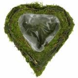 Plante coeur de vigne, mousse 22cm x 20cm H7cm