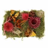 Mélange de fleurs à sec avec cônes et mousse rouge 150g décoration d'automne