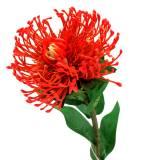 Protea Artificielle Rouge 73cm