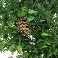 Couronne décorative avec branches de conifères, cônes et buis vert 60cm